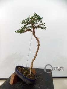 Ricardo_Paiva_Buxus_Lietrati_05
